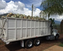 agave truck